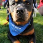 bigstock-a-cute-dog-at-a-local-park-52280755